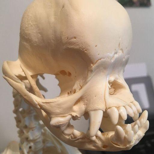 Can Someone Explain To Me How Sun Bleaching Works Skulls Bones And Oddities Amino