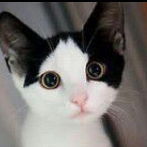Aliyah Cat Ears